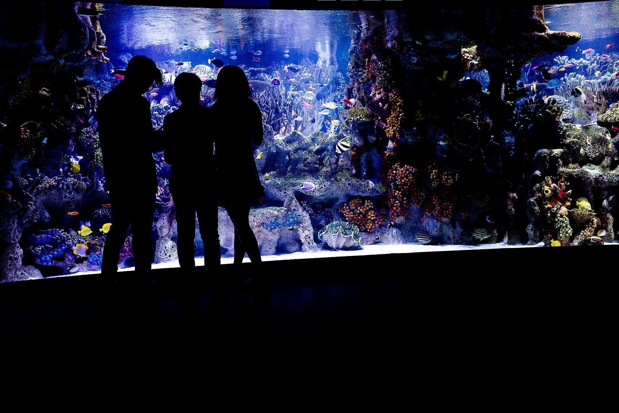 New England Aquarium Wedding  I  Guests enjoy cocktail hour.