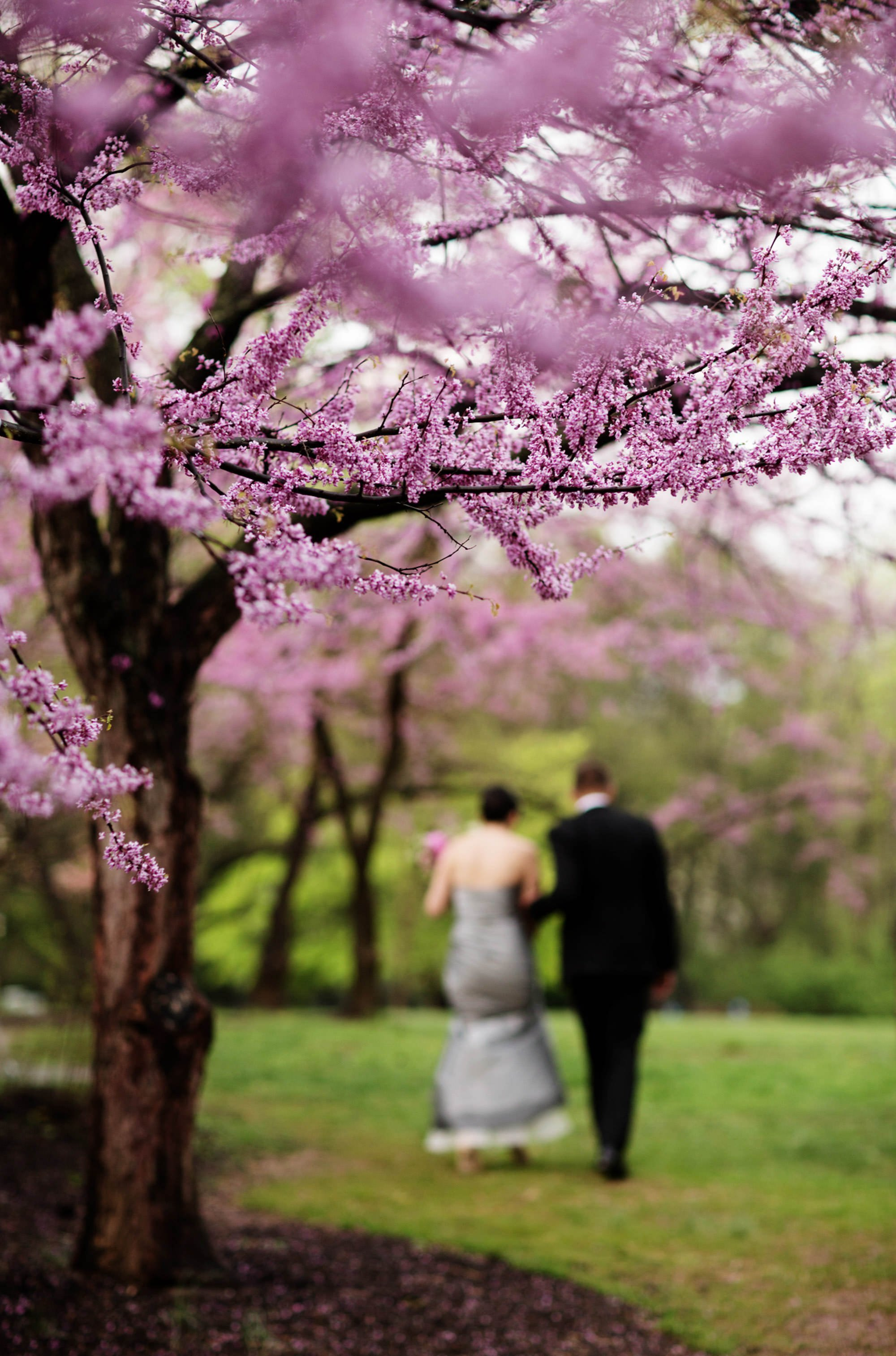 The bride and groom walk among cherry trees after the ceremony of their Woodend Sanctuary Wedding.